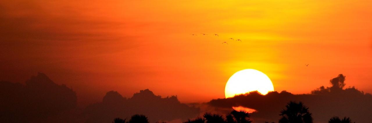 cropped-sunset-trees1.jpg