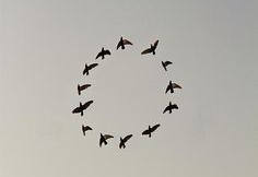birds circle