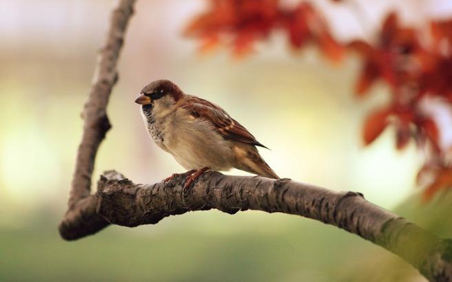 sparrow branch