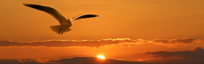 sunset bird.jpg