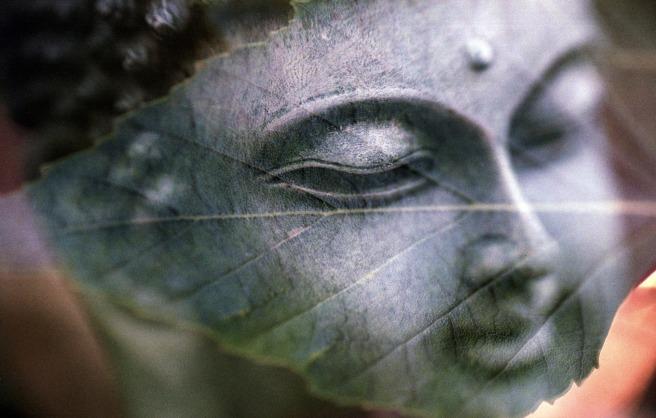 buddha leaf.jpg