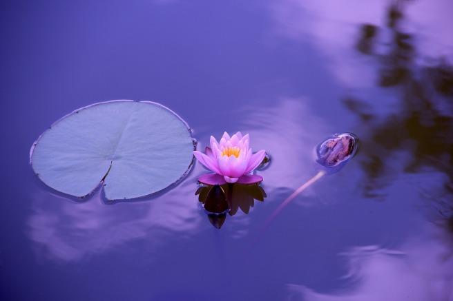 lotus leaf water
