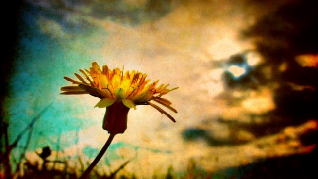 humility flower.jpg