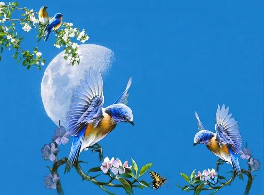 hummingbird moon.jpg