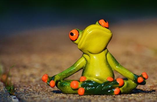 frog meditate