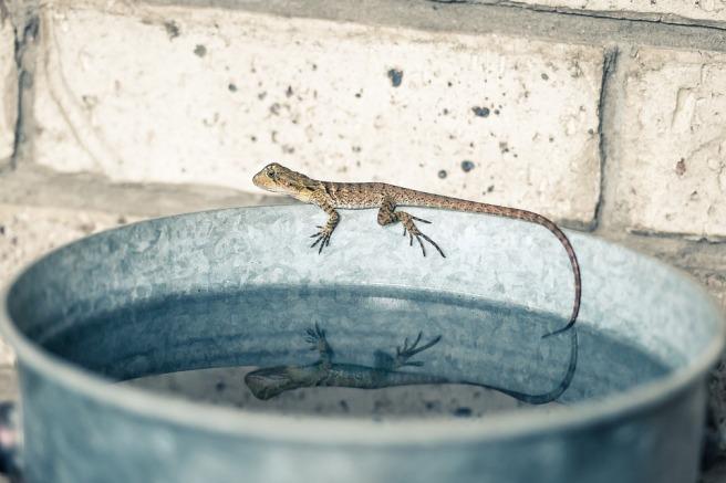water lizard nonduality ego